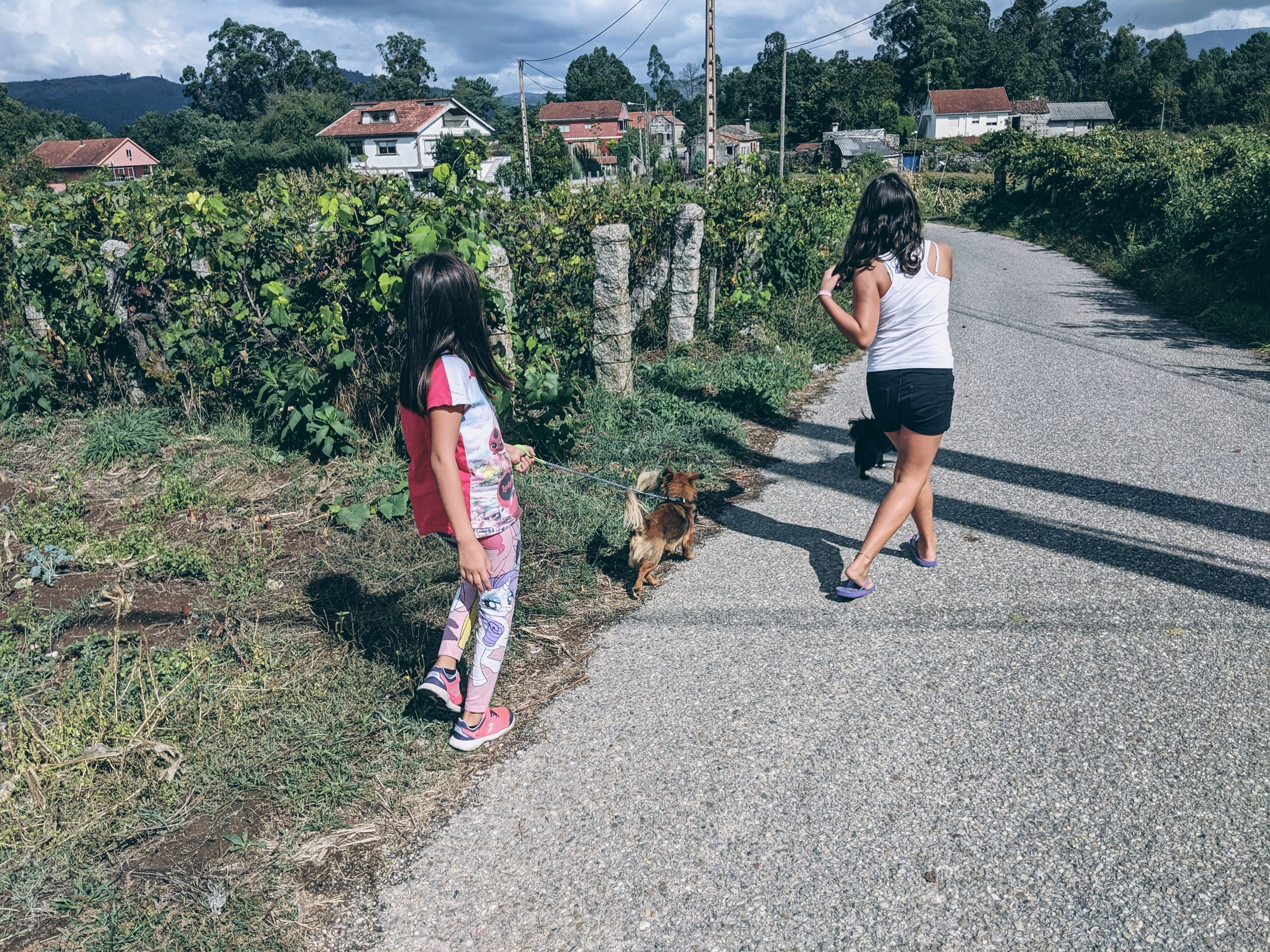 Dog walking in Ganade, Ponteareas